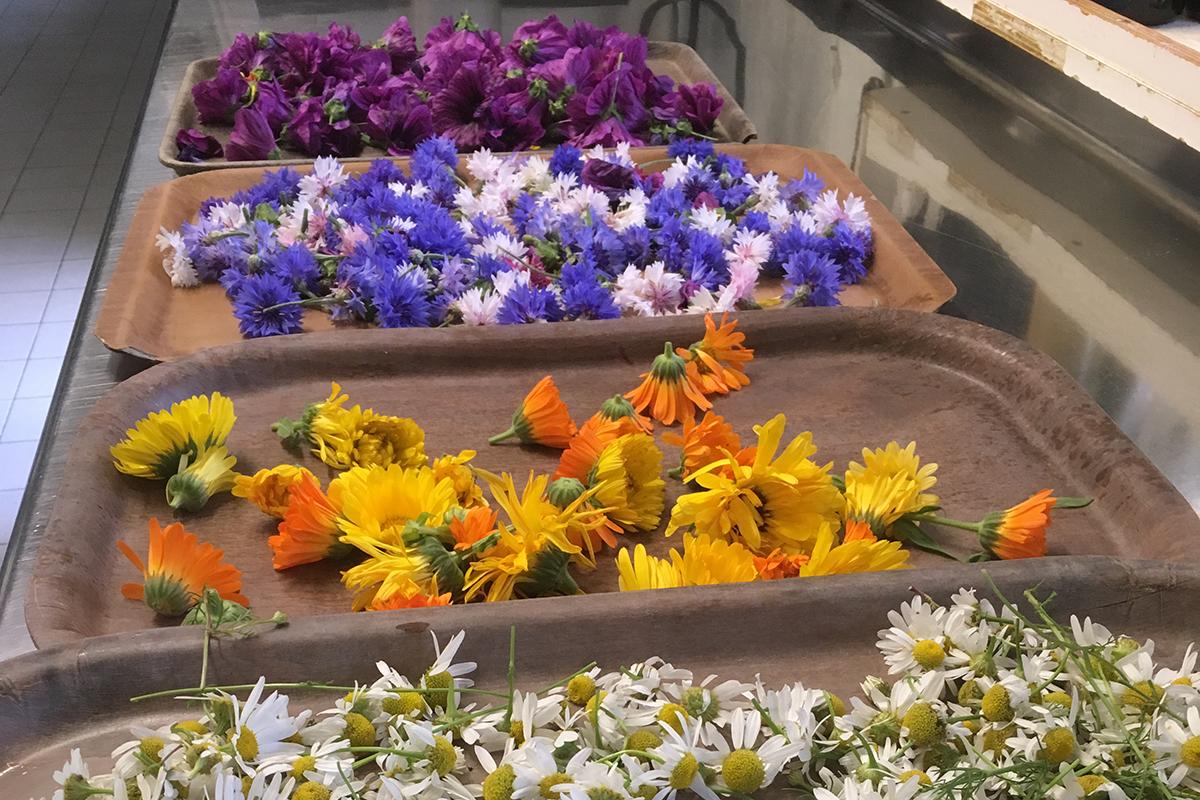 fiori su vassoi